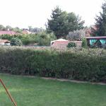 Machulince - strihanie živého plota