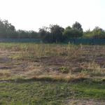 Rajčany - kosenie silne zaburineného pozemku